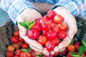 acerola_complement-alimentaire-france.com