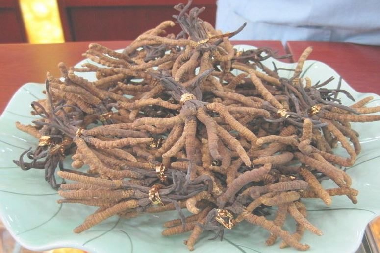 cordyceps sinensis_complement-alimentaire-france.com