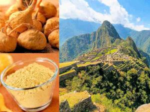 maca : racine, poudre et Pérou