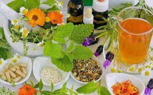 plantes médicinales2